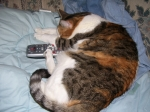 Barb Sanders' cat Tiger Lily (most people don't have to fight for control of the remote with a cat!)