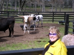 Barb with longhorn cattle - Texas March 2010
